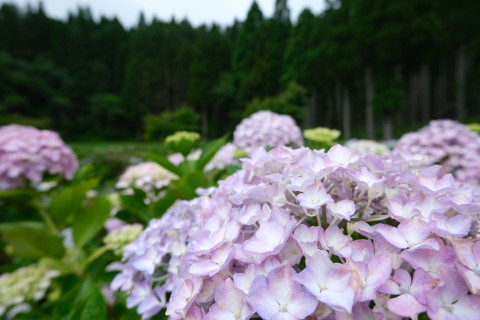 Nagahama190612.jpg