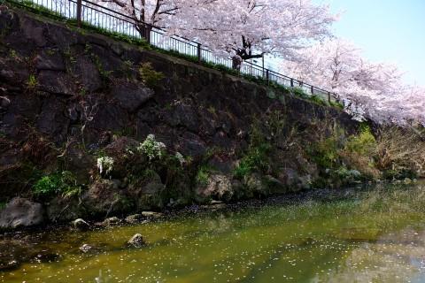 Sakura2018-28.jpg